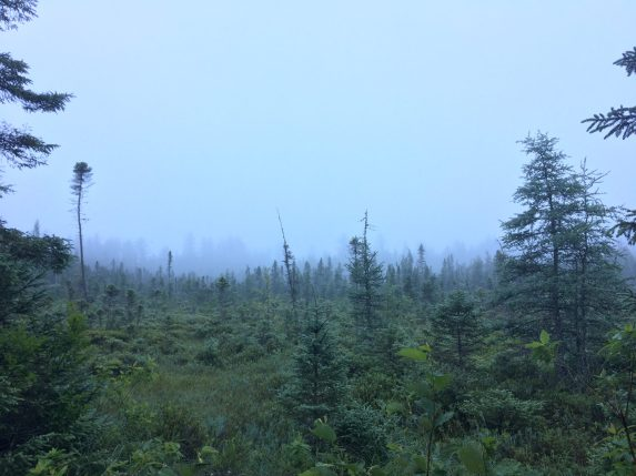 Fog on the bog