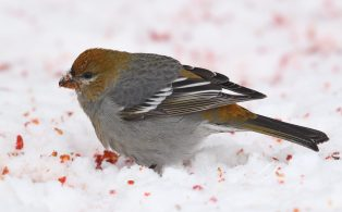 Snacking in the snow