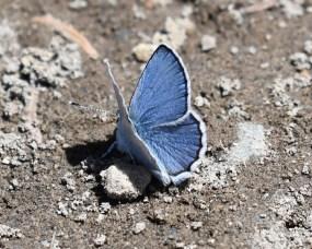 Brilliantly blue