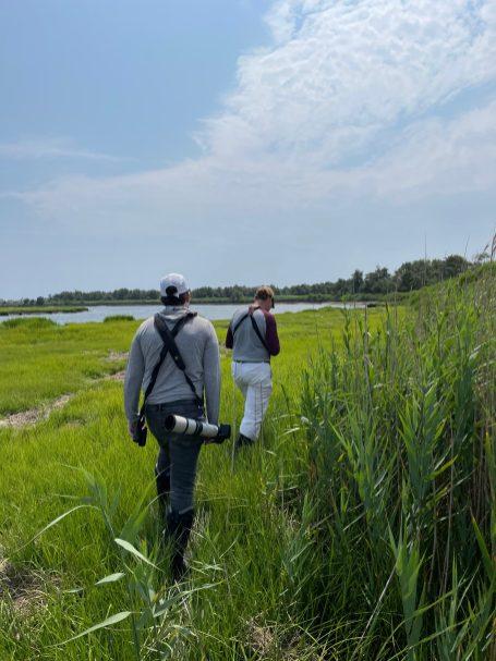 Marsh patrol