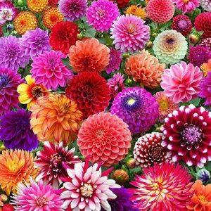 Haven Blomsterløg og blomsterknolde