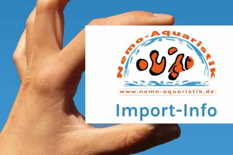 Nemo-Aquaristik Import-Info