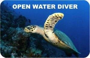 Certyfikat Open Water Diver