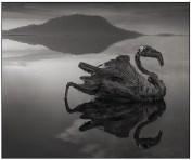 | Calcified Reflected Flamingo, Lake Natron, 2010 |