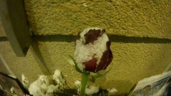 17.02.2018 Дежурство на Мосту Немцова. Роза в снегу