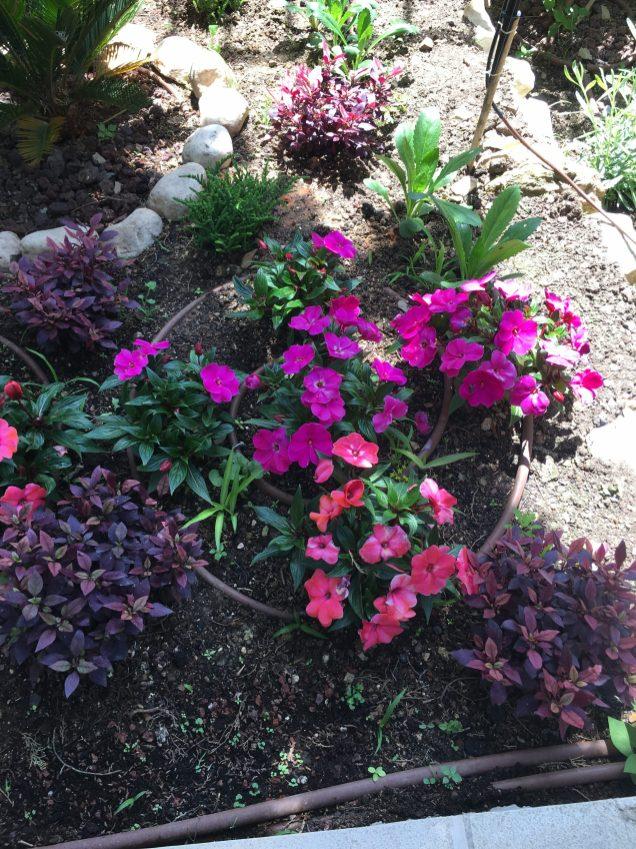 Цветы рядом с храмом Марии Магдалины на Масличной горе