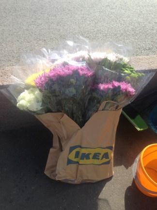 Цветы, купленные на ваши деньги, друзья! Спасибо!