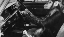 Most az autósokat verik át – igazi mestermunka