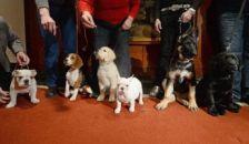 Huszonhárom éve a legnépszerűbb kutyafajta