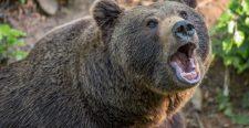 Önbeteljesítő tréfa – Egy orosz nyugdíjas azzal viccelt, hogy ha nem tér haza, akkor megette egy medve…