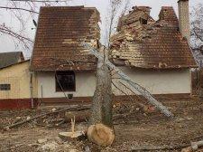 30 méteres fa vágott ketté egy házat Magyarországon