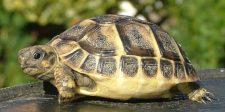 Itt a fotó: ez a nő verte agyon a teknőst a budapesti állatkertben