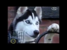 Kutyadoki női változatban