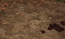 Felderítő – Megnyomorítják a tokaji és a szabolcsi gazdákat