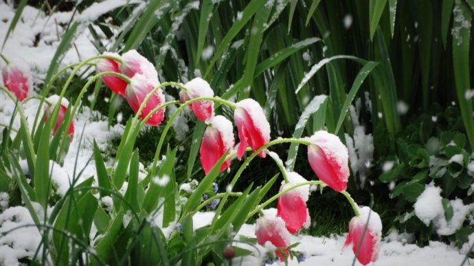 A meteorológusok szerint a mai nappal véget ér a bolond havas április