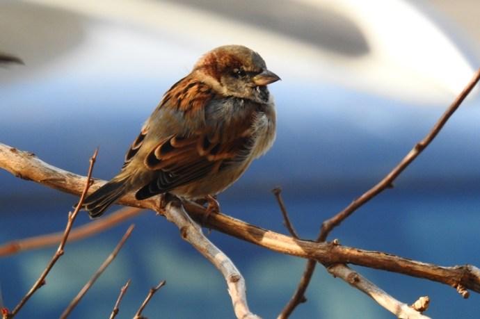 Európa-szerte vészesen fogy a madárállomány