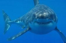 Gyakoribbak a cápatámadások, mint gondolnánk, de az utazási irodák hallgatnak róla