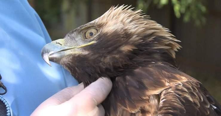 Csökken az élőhelye és nő avédett ragadozó madarak veszélyeztetettsége