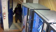 Úgy sétált be a medve a rendőrségre, mintha csak ott dolgozna