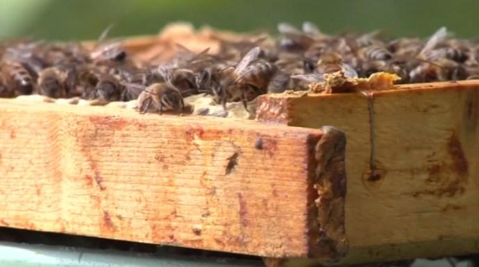 A politika rá se hederít a tömeges méhpusztulásra