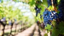 Franciák áradoznak a balatoni borokról