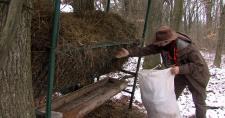 A sertéspestis miatt korlátozzák a vadak téli takarmányozását