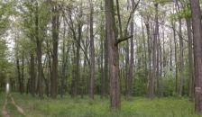 Nincs köze az EU-nak ahhoz, hogy milyen fák nőnek nálunk