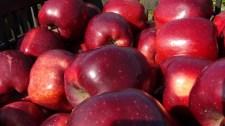 Morvai levele: almavásár a magyar gazdálkodók és a fogyasztók egészsége érdekében