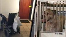 Két embert ölt meg egy harci kutya Németországban