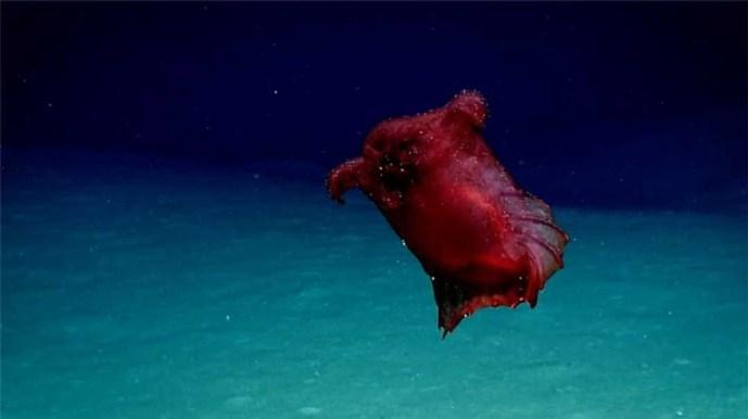"""VIDEÓ: Elképesztő felvételek a """"fej nélküli tengeri csirkéről"""""""