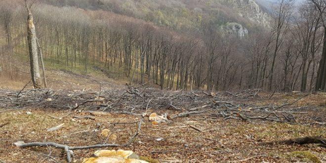 Magyarország egyik legidősebb erdejét vágták ki a Bükk-hegységben