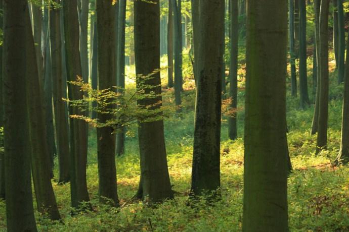 Megduplázódott hazánk erdőterülete