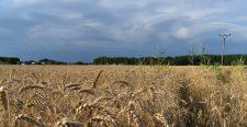 Az SaS-es képviselő szerint egyes élelmiszerek hamarosan hiánycikkekké válnak