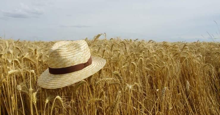 A csallóközi mezőgazdaság jövője? Az Istropol nemesítővállalat fajtabemutatóján jártunk – KÉPRIPORT