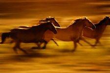 A lovak meghalnak vagy elpusztulnak?