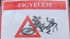 Vigyázat, ölőcsapdákat helyeztek ki egy magyar erdőben
