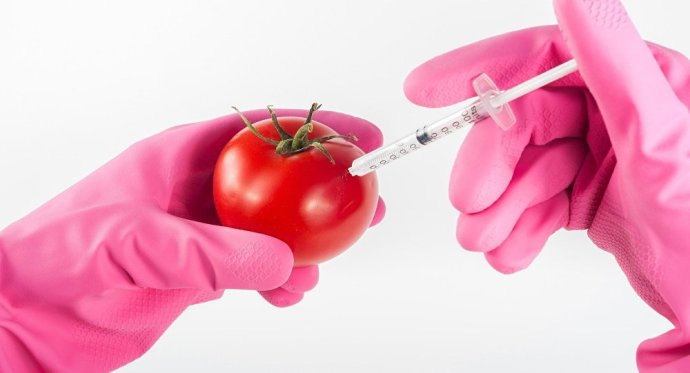 Oda a GMO-mentességünk? Újabb európai bírósági terrordöntés