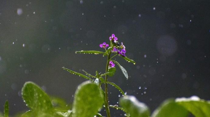 SHMÚ: Bőséges volt az eső áprilisban, de nem tudta ellensúlyozni a márciusi hiányt