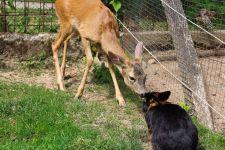 Végre a rajkók is változatosan táplálkozhatnak: ellopták a parádfürdői mini állatkert csaknem összes lakóját