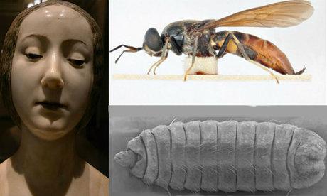 Mit keresett egy amerikai légylárva da Vinci hercegnőjében?