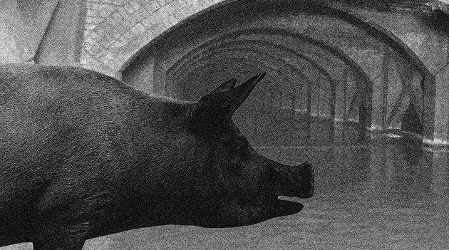 Valóban élhettek elvadult sertések a 19. századi London csatornarendszerében?