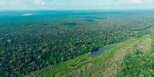 Az esőerdő valójában nem termel oxigént