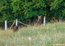 Legalább húsz medve él Székelyudvarhely közelében