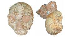 150 000 évvel korábban érkezhetett Európába a modern ember, mint eddig gondolták