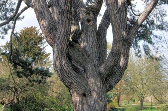 """Kivágják """"Tolkien fáját"""" Oxfordban"""
