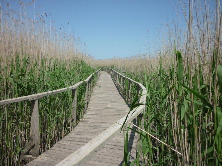 Ingyenes kerékpáros és kenus programok diákoknak a Tisza-tónál