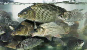 Nem lehet majd élő halat kapni