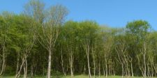 Jogerős bírósági döntés: Visszakerül állami tulajdonba 9323 hektárnyi erdő, Bánffy Dániel egykori tulajdona