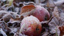 Hétfőn hajnalban talajmenti fagyok várhatók