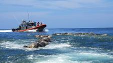 Döbbenetes! 300 tengeri teknős teteme sodródott a vízen Mexikó partjainál